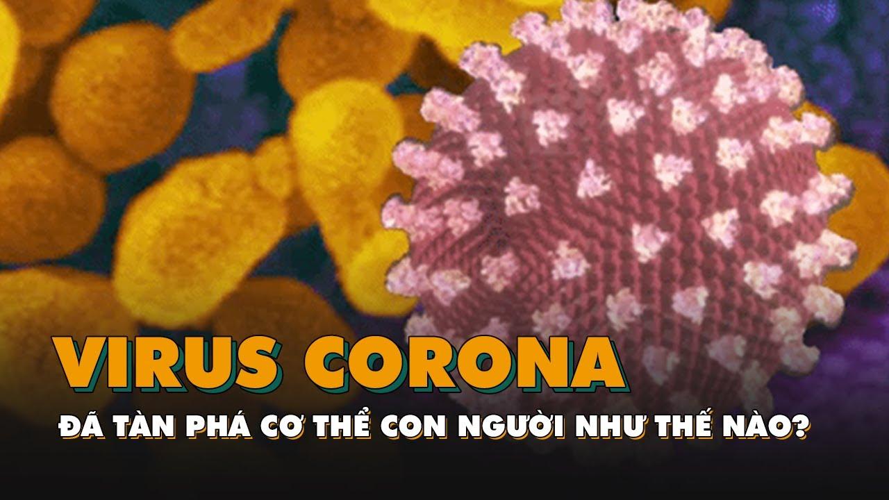 Virus Covid-19 tàn phá cơ thể người như thế nào?